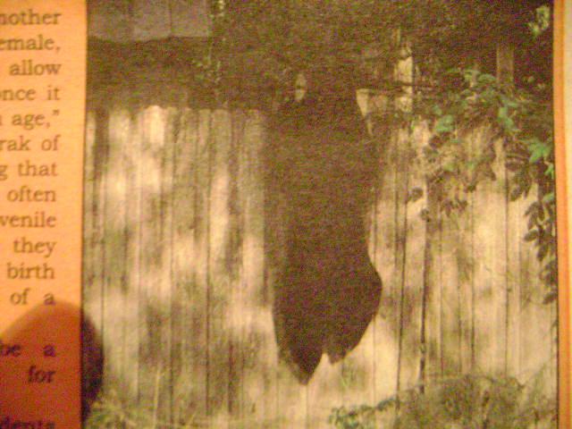 N.W.T. minister wants polar bear hunt ban reversed-bear-002.jpg