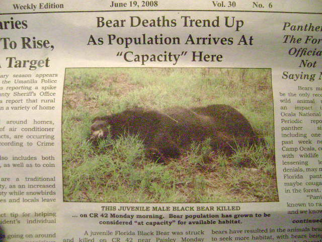 Bid to allow guns in national parks-bears-001.jpg