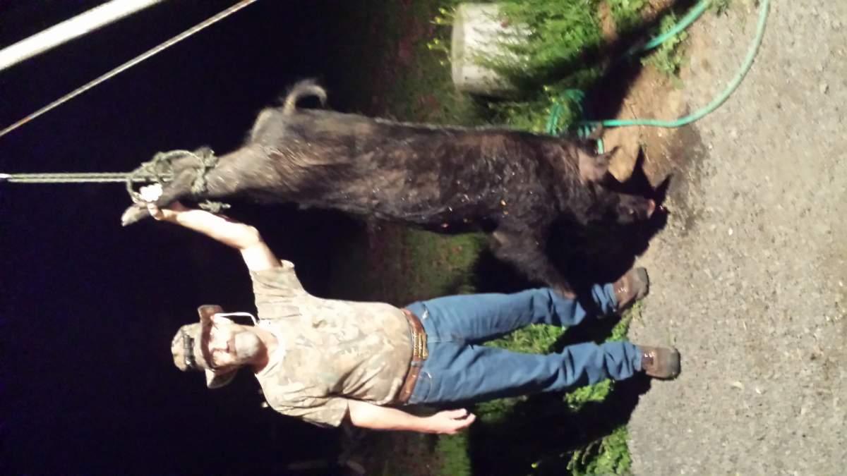 NC man bags 500+ pound hog-big-pig.jpg