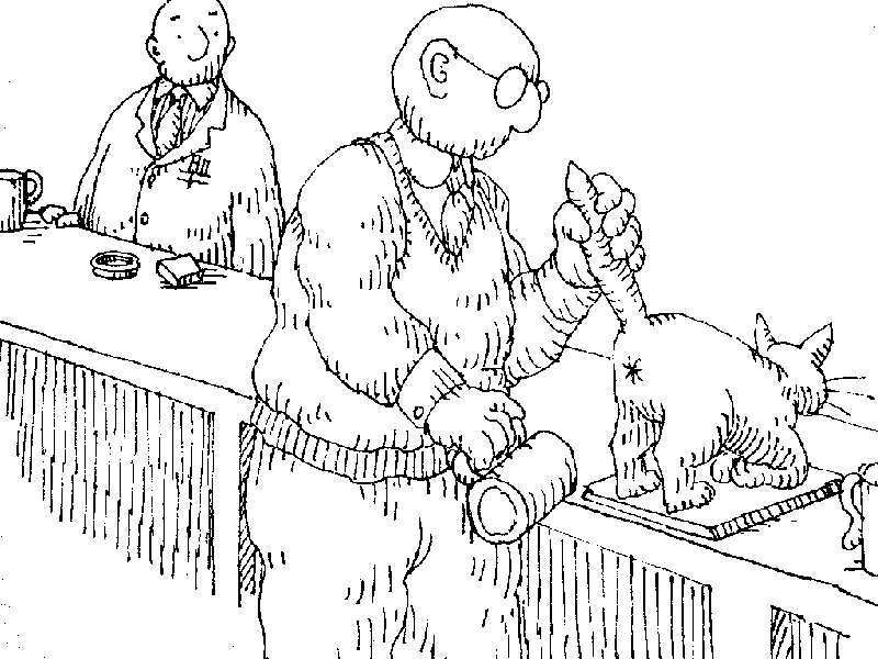Uses for a dead cat-cat24.jpg