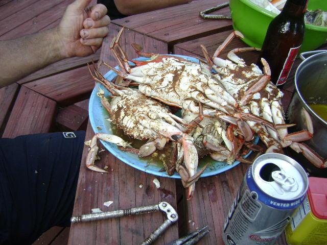 Blue Crabs..-crabs-ak-003.jpg