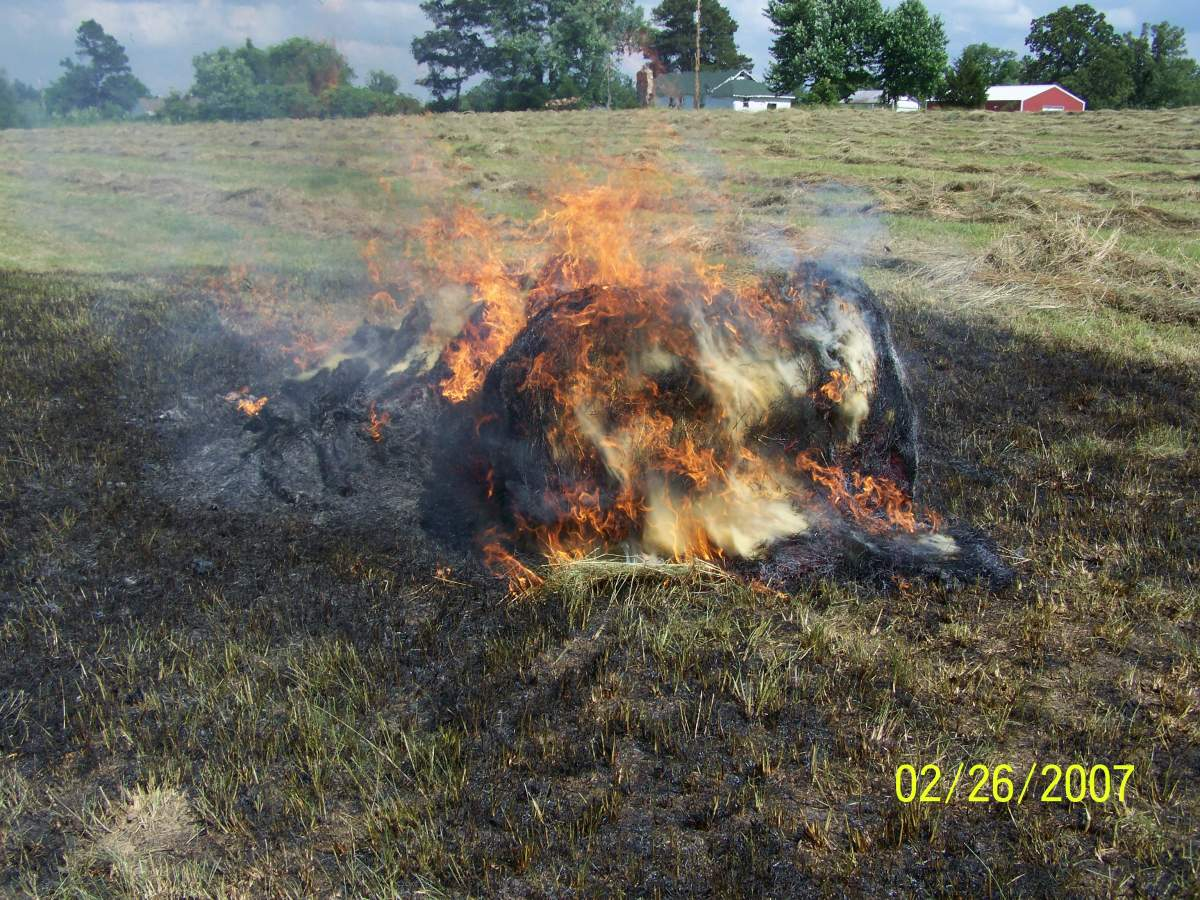 2014 garden harvests-fire-004.jpg