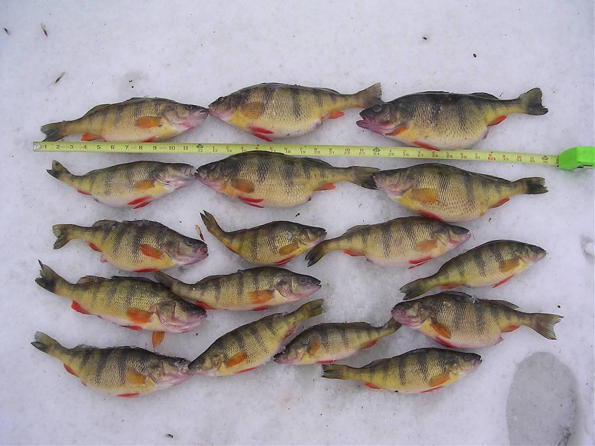 Close to last ice,,,-fishing-chris-2-008.jpg
