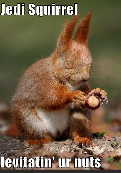 Post a funny picture or gif-funny-pictures-jedi-squirrel-levitatin-ur-nuts.jpg