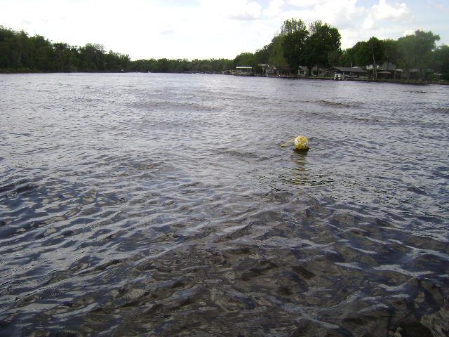 Texas best kept secret-gators-001.jpg