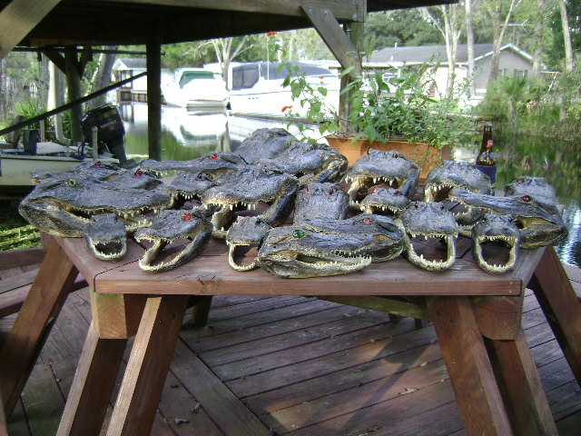 Where Ya Stackin Em?-gators-022.jpg