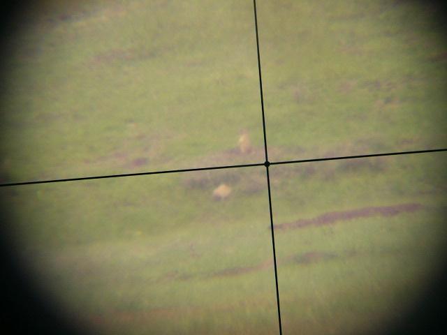 DOG HUNTING-p1020879.jpg