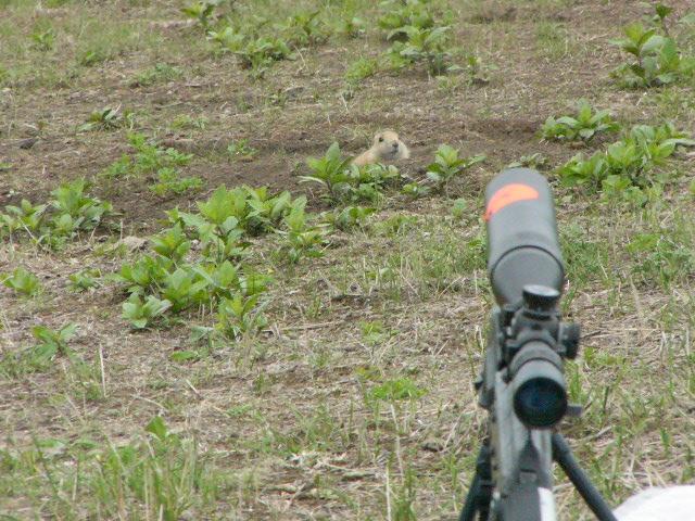 DOG HUNTING-p1020895.jpg