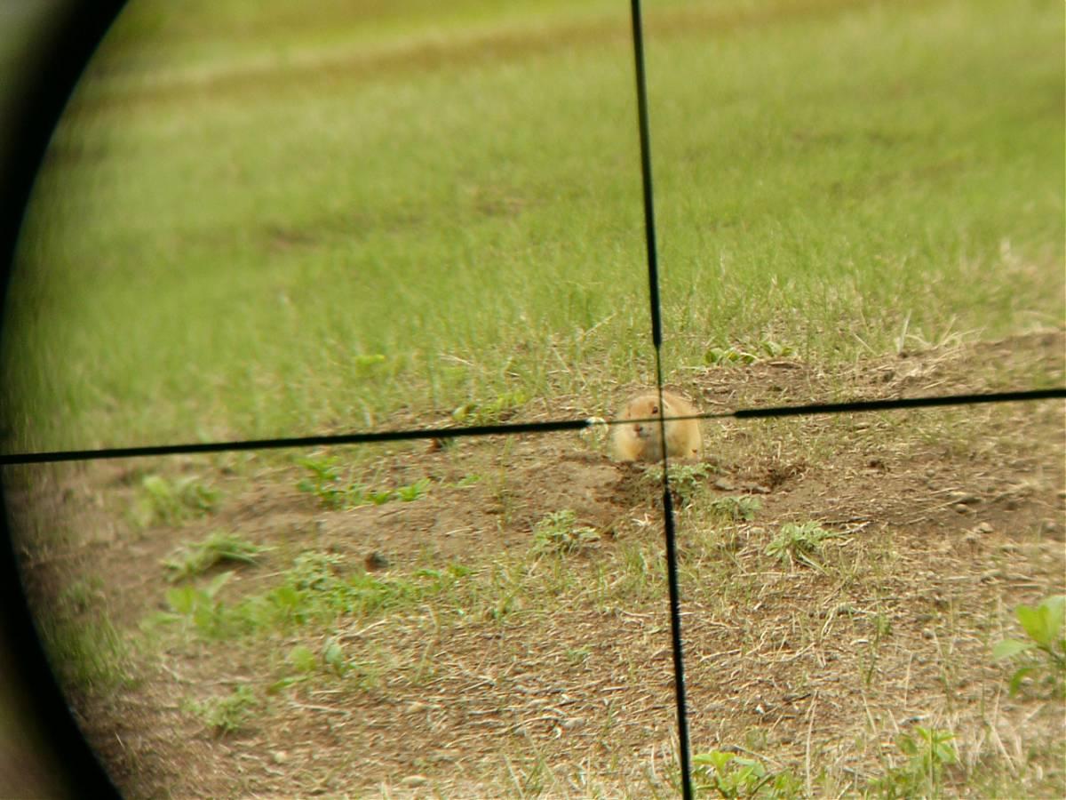 DOG HUNTING-p1020906.jpg