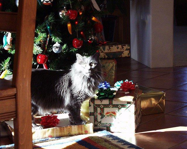 12 cats of Christmas-rosie.jpg