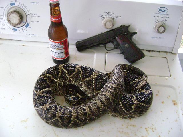 SNAKE I.D. HELP PLEASE. ??-snake-004.jpg