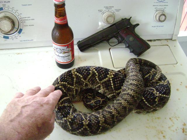 SNAKE I.D. HELP PLEASE. ??-snake-005.jpg
