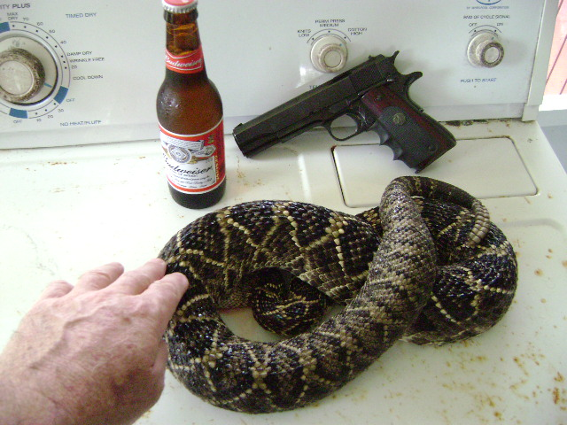 Anybody try swamp cabbage..-snake-005.jpg