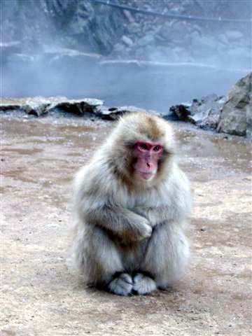 a special post for Cheezy-snow-monkey.jpg